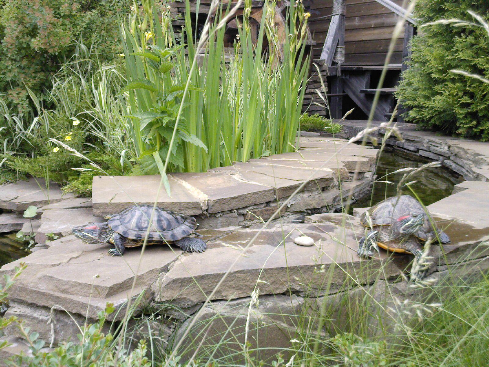 Водоем для черепахи своими руками