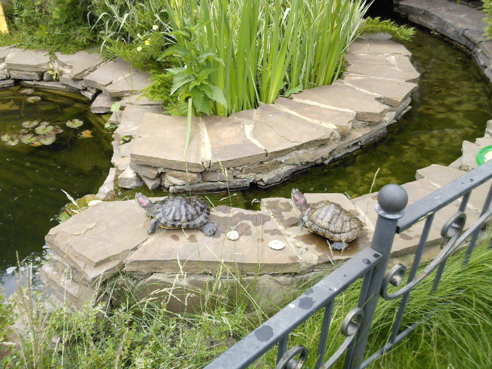 Уличный аквариум на даче своими руками 70