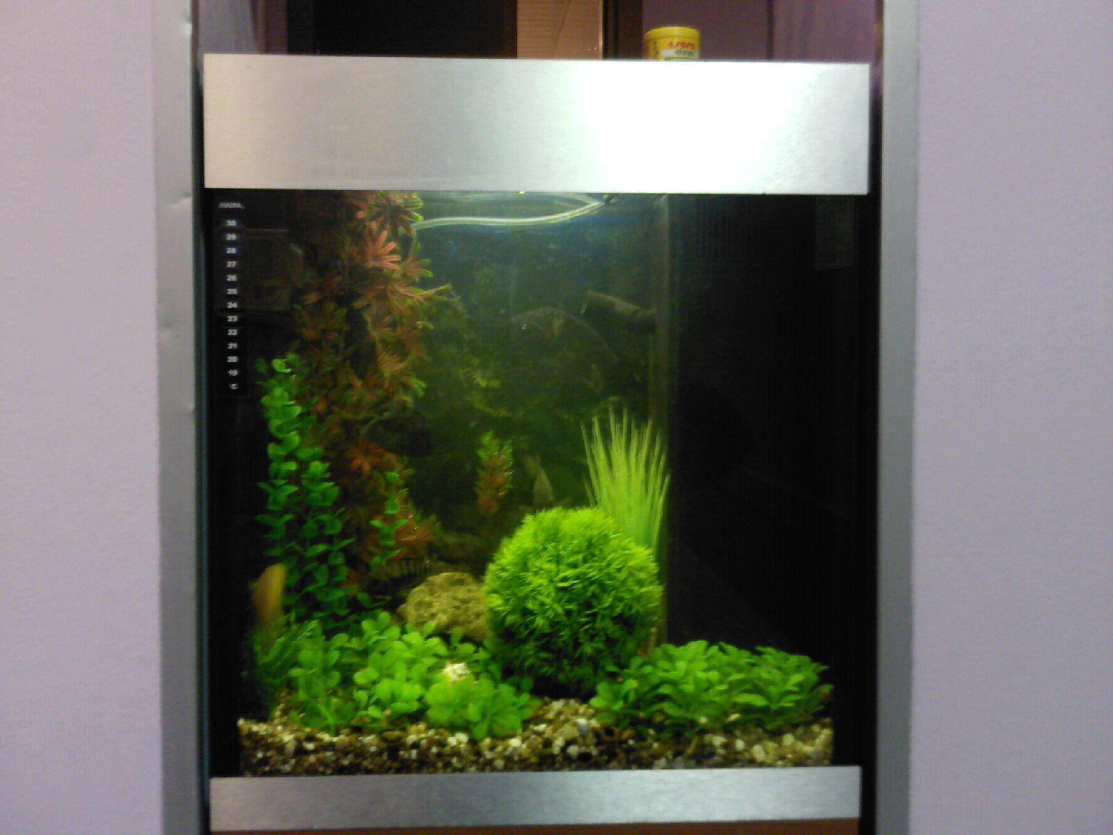 Фото аквариума 40 л дизайн