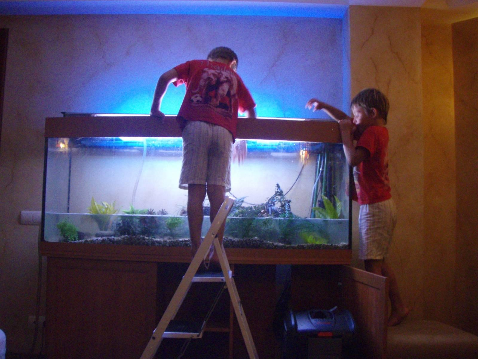 Как смягчить воду в аквариуме 66