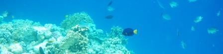 http://www.aquariumist.ru/shapki/001.jpg